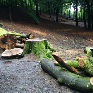 Lumber THw
