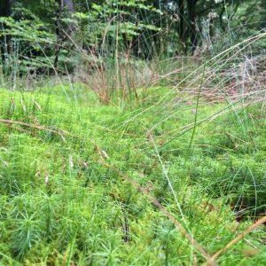 Moss THw