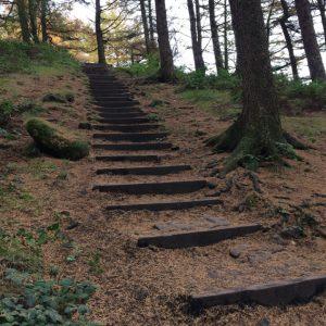steps-dovw