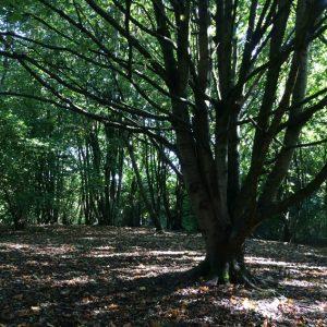 woodland-cwpw